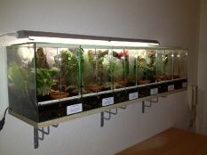 Blockterrarium für Avicularia spec.